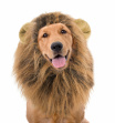 Lions Mane Wig For Dogs